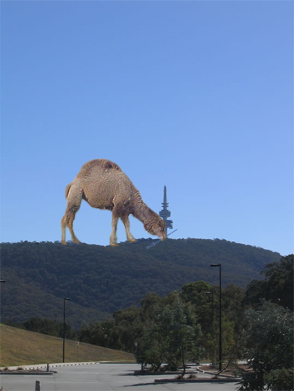 Camel eating Telstra Tower